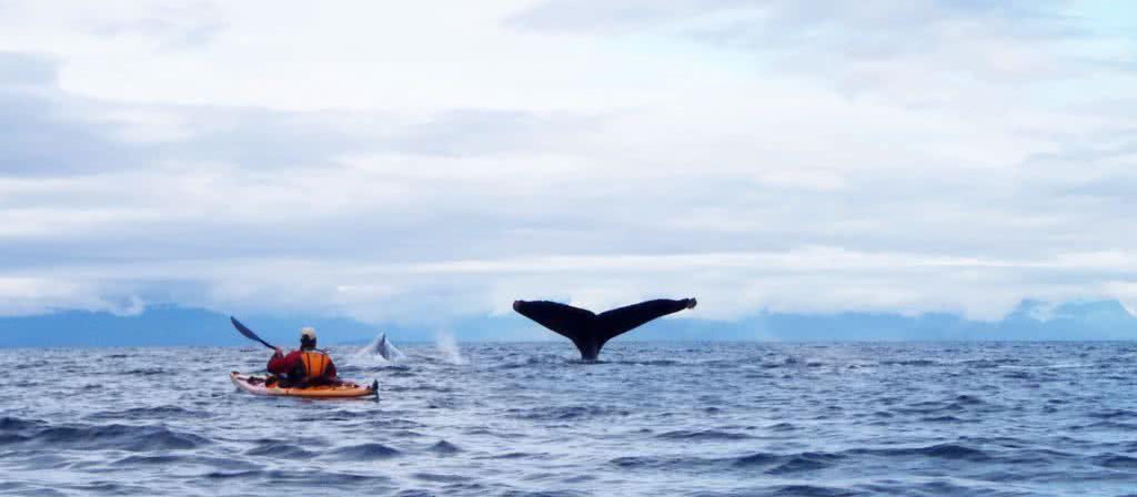 tour-custom-whales