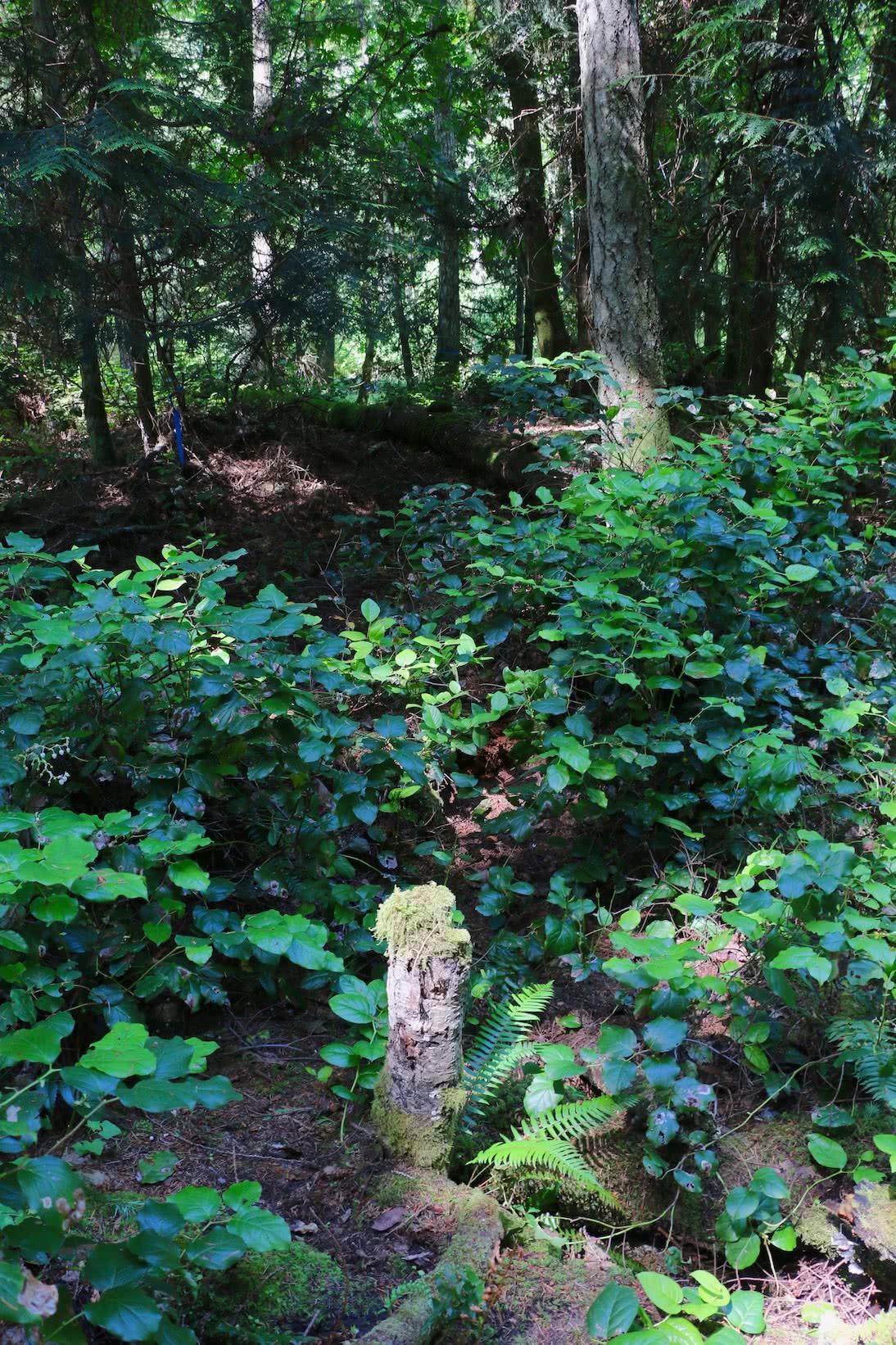 D'Arcy Island Trail