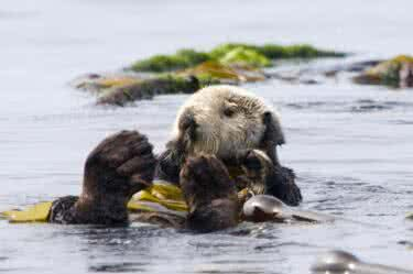5 day Sea Otter Kayak Tour – Women's Only