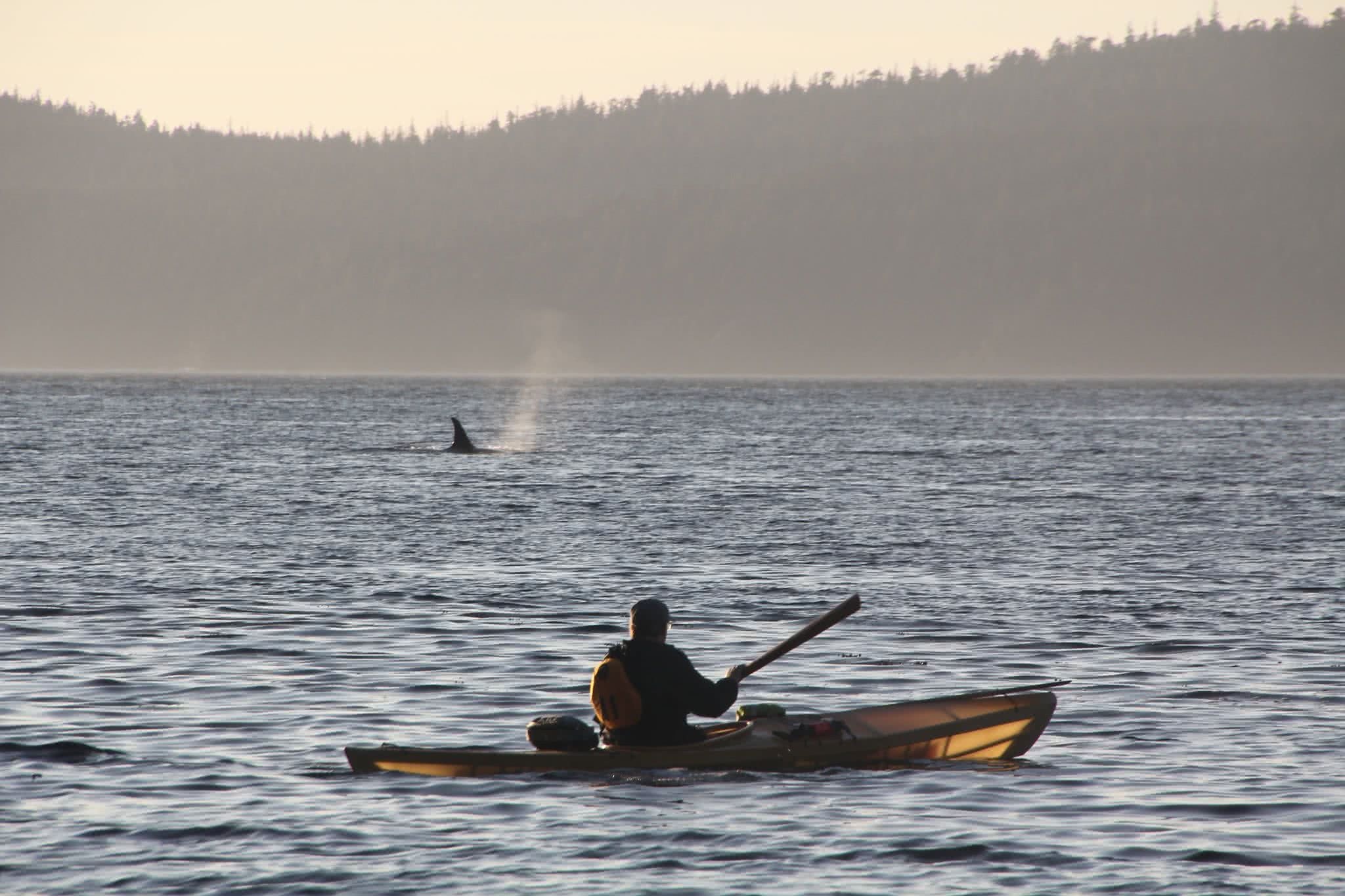 Paddling the Inside Passage: Q & A with Going Solo Adventures